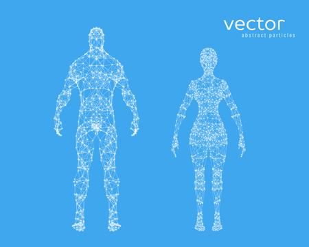 Resumen ilustración vectorial de cuerpo masculino y femenino sobre fondo azul.