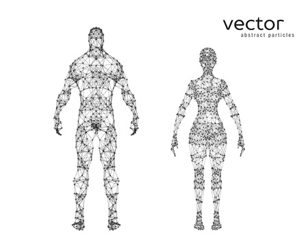 Abstract vector illustration of male and female body on white background. Vetores
