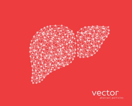 Resumen ilustración vectorial de hígado humano sobre fondo rojo.