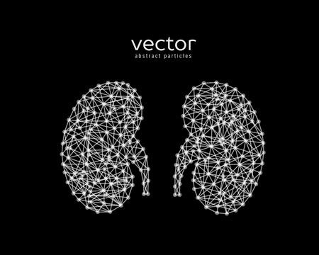 黒い背景に人間の腎臓の抽象的なベクトル イラスト。  イラスト・ベクター素材