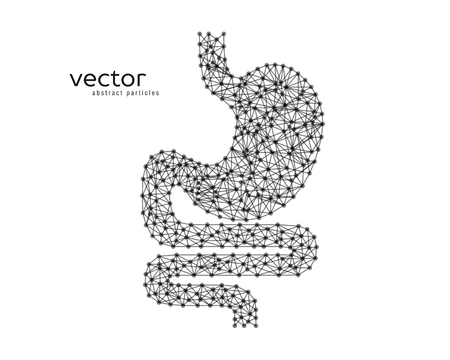 joining: Abstract vector illustration of human stomach on white background.
