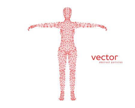 Resumen ilustración vectorial de cuerpo femenino sobre fondo blanco. Foto de archivo - 84068667