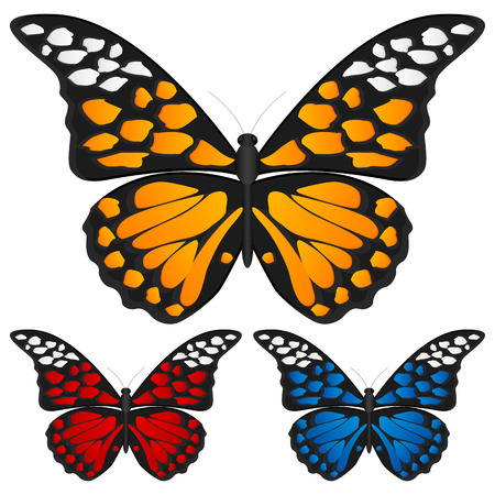 Butterfly set isolated on white background, Vector illustration. Stock Vector - 8148596