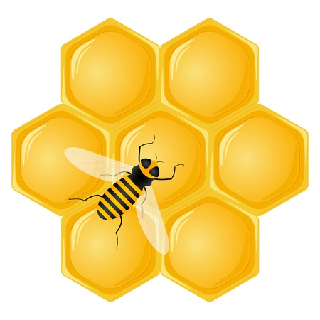 worker bees: Honeycomb and bee isolated on a white background. Vector illustration.