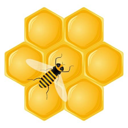 abejas panal: Nido de abeja y bee aislado en un fondo blanco. Ilustraci�n vectorial.