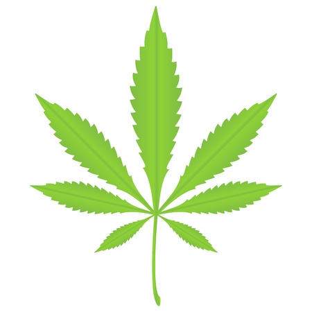 cannabis: Gr�ne Marihuana Blatt auf wei�em Grund.