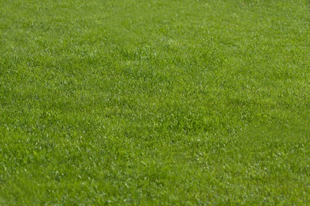 Green grass backgrounds. Macro photo. photo
