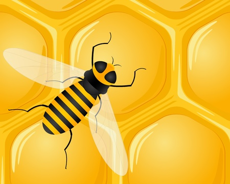 Honeycomb and bee background.  Vector