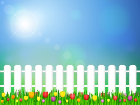 wooden fence: Tulip flowers field and blue sky Illustration