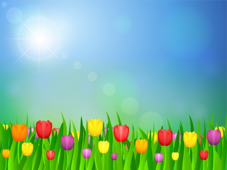 tulips in green grass: Tulip flowers field and blue sky. Vector illustration. Illustration
