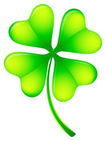 four leafs clover: Verde de cuatro hojas de tr�bol en un fondo blanco.