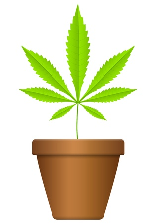 Flowerpot with marijuana leaf  on a white background. Stock Vector - 17594243
