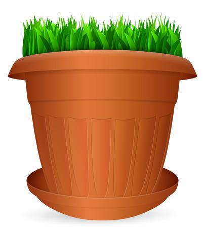 flowerpots: Flowerpot grass on a white background.
