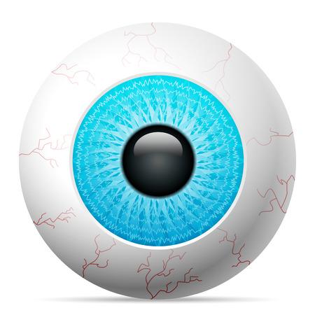 ojo azul: Ojo azul sobre un fondo blanco.