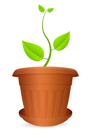 crock: Flowerpot plant on a white background.
