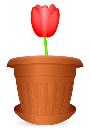 turf flowers: Flowerpot tulip on a white background. Vector illustration.