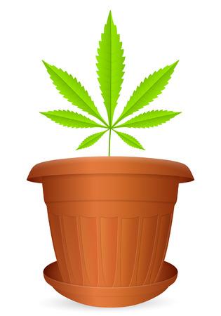 flowerpot: Flowerpot marijuana leaf on a white background. Vector illustration.