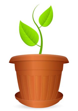 Flowerpot plant on a white background. Vector illustration. Illustration