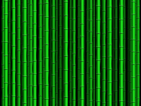 green bamboo: Green bamboo poles forest background.