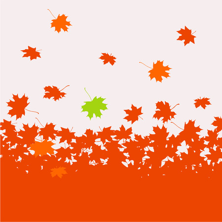 autumn leaves falling: Autumn background - maple leaves