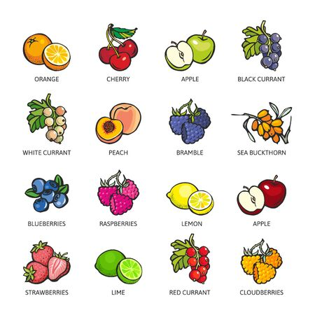 Orange, Cherry, Apple, Black Currant, Peach, Bramble, Sea Buckthorn, Blueberry, Raspberry, Lemon, Lime, Strawberry, Red Currant, Cloudberry. Vector flat icon illustration, isolated on white.