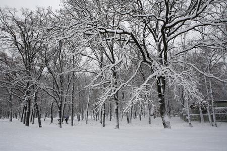 drzewa w zimowym parku śnieżnym