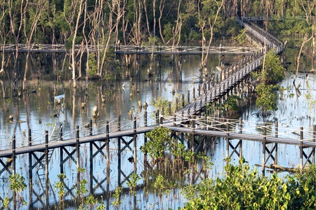 View of mangrove conservation center in Thailand photo
