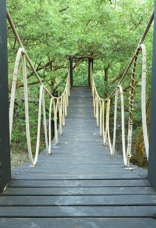 Bridge in mangrove conservation center in Thailand photo