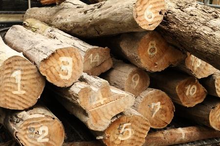 sawed: Pile of wood logs