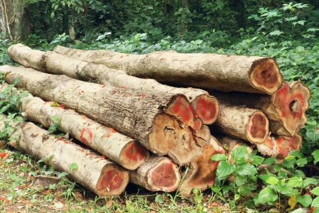 sawed: Pile of wood logs in the forest
