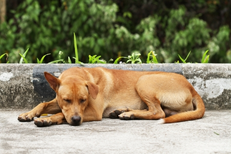 stray dog: Homeless dog on the road
