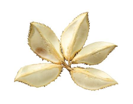 Durian fruit shell isolated on white background Stock Photo