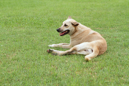 stray dog: Homeless dog in the park
