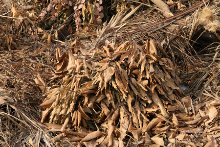 degradable: Pile of dried plant on the landfill