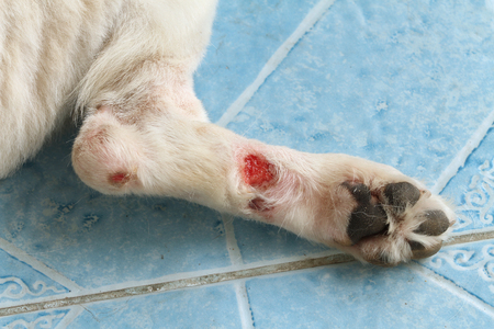 ailing: Chronic wound on a dog leg