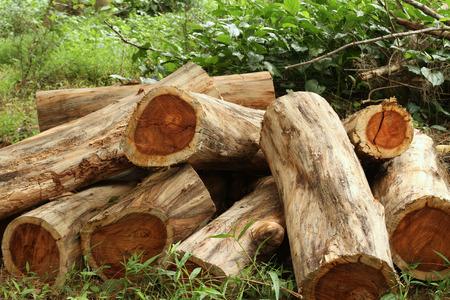 シャム ローズウッドまたはフォレストのタイ ローズウッド原木