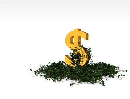 Ivy with leaves growing on the dollar
