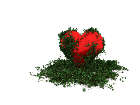 Ivy with leaves growing on the red heart