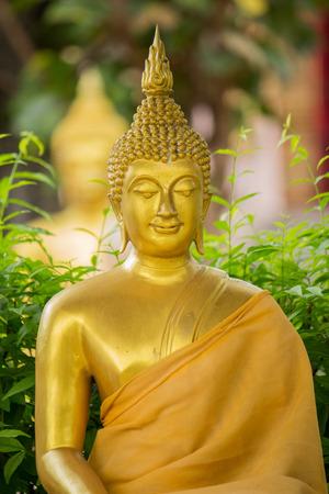 cabeza de buda: The  Buddha Head in Thailand temple, Golden Buddha