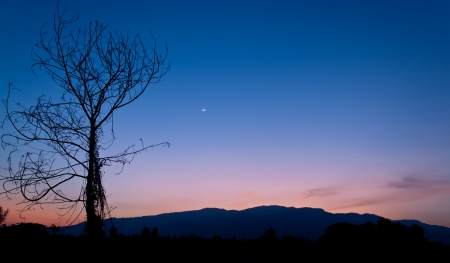 Silhouette tree at twilight time