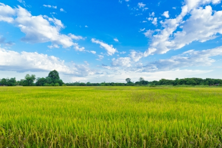rice field  in blue sky, North of thailand photo