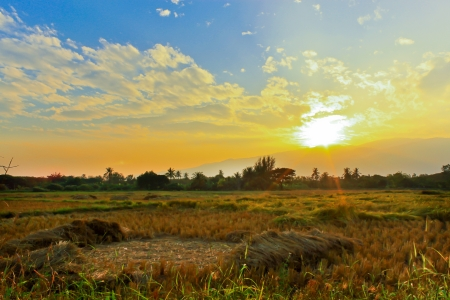 paddy field at sunset photo