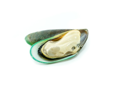 New Zealand green mussel on white background