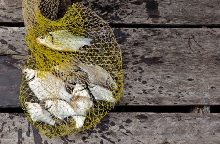 Fish in a fishing nets on wooden background photo