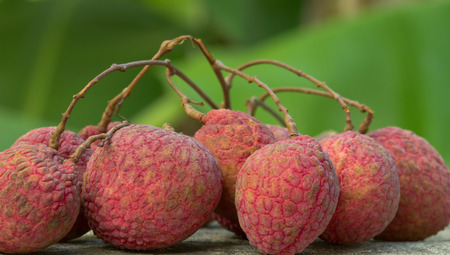 lychees: fresh lychees Tropical fruit Stock Photo