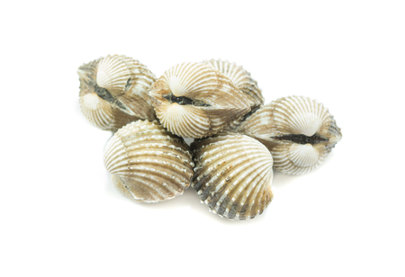 cockles: fresh cockles  on white background, seafood