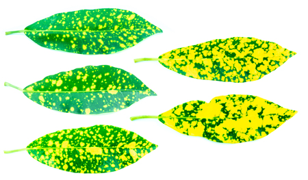 colorful of tree leaf on white background