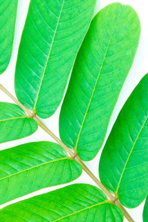 Closeup of  green leaf  background Banco de Imagens