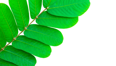 green leaf on white with space for text Banco de Imagens