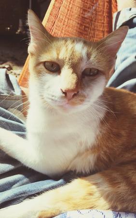 orange cat looking camera